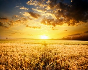 Burning-Wheat-Field-Photography