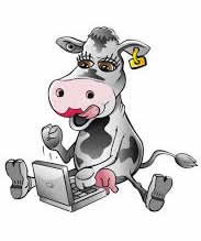 cow with computer2